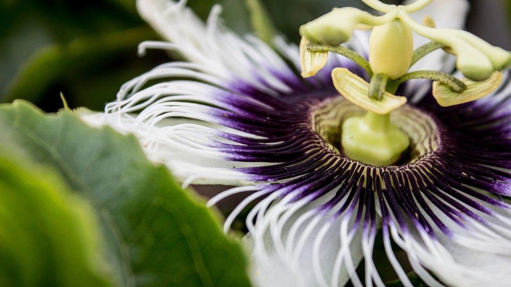 flower-1834687_1920.jpg
