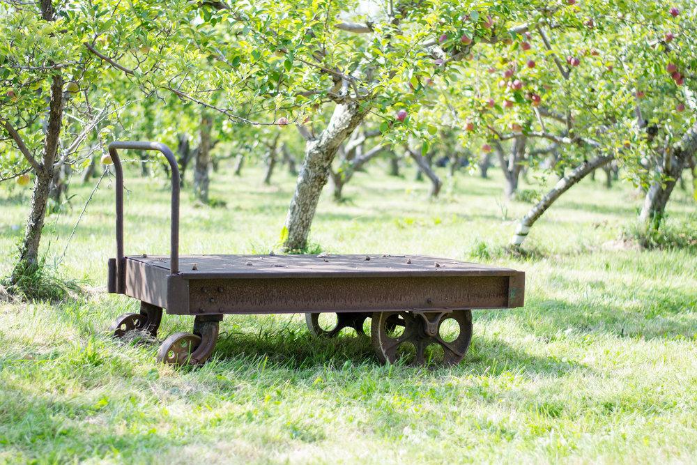 apple orchard (1 of 4).jpg