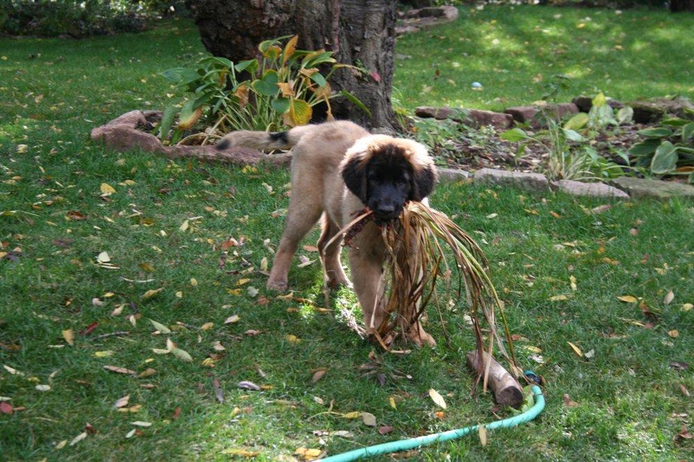 Audrey gardening.jpg