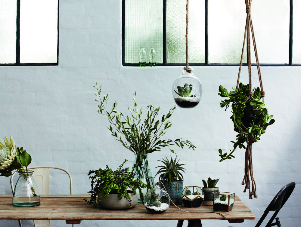 A collection of the stunning new Sheridan Studio vases, planters, terrariums and hanging pots.