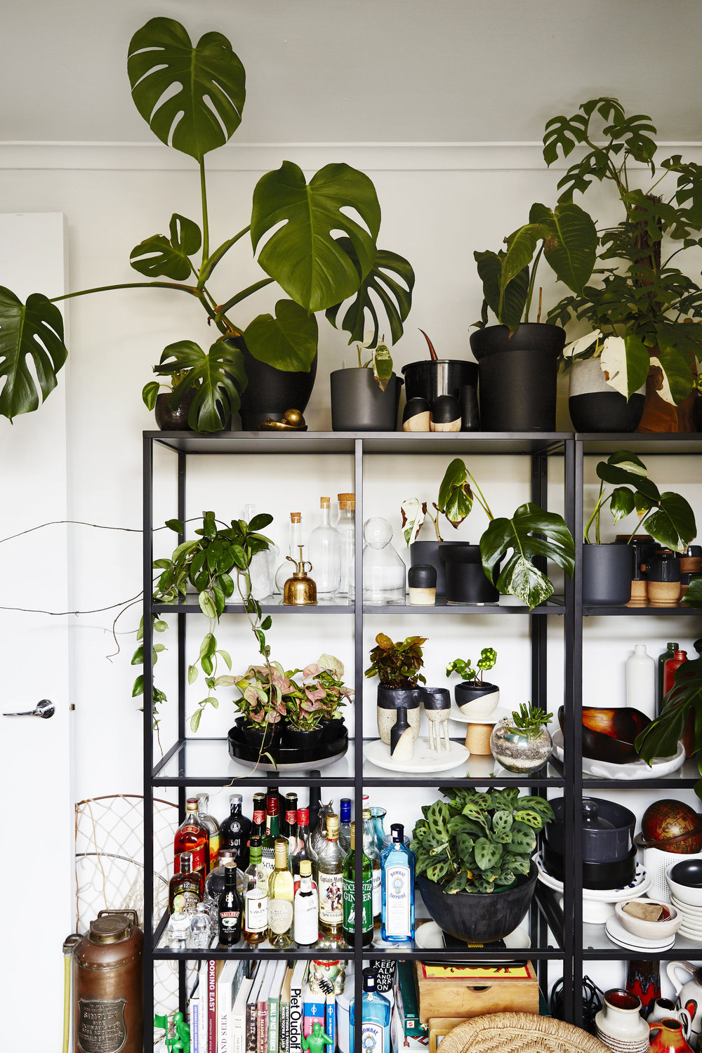 A snapshot from Jason and Nathan's home where they have over 400 plants.