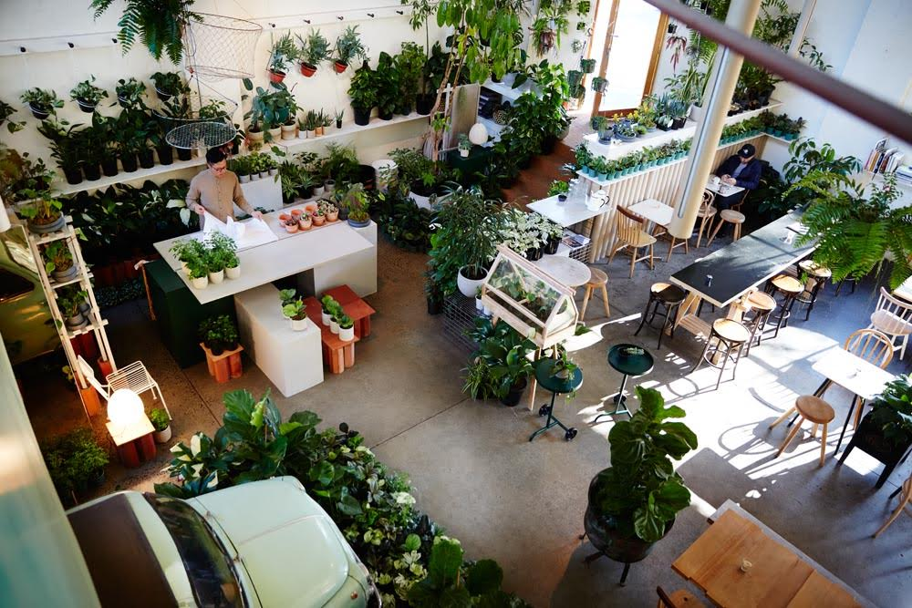 The Plant Society   store in Collingwood.