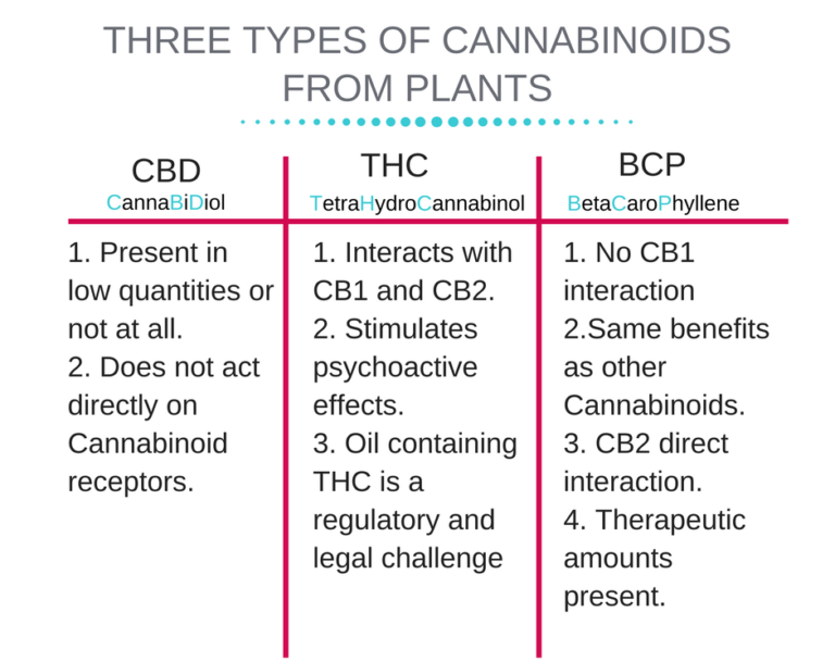 Endocannabinoid-System-5-768x644.png
