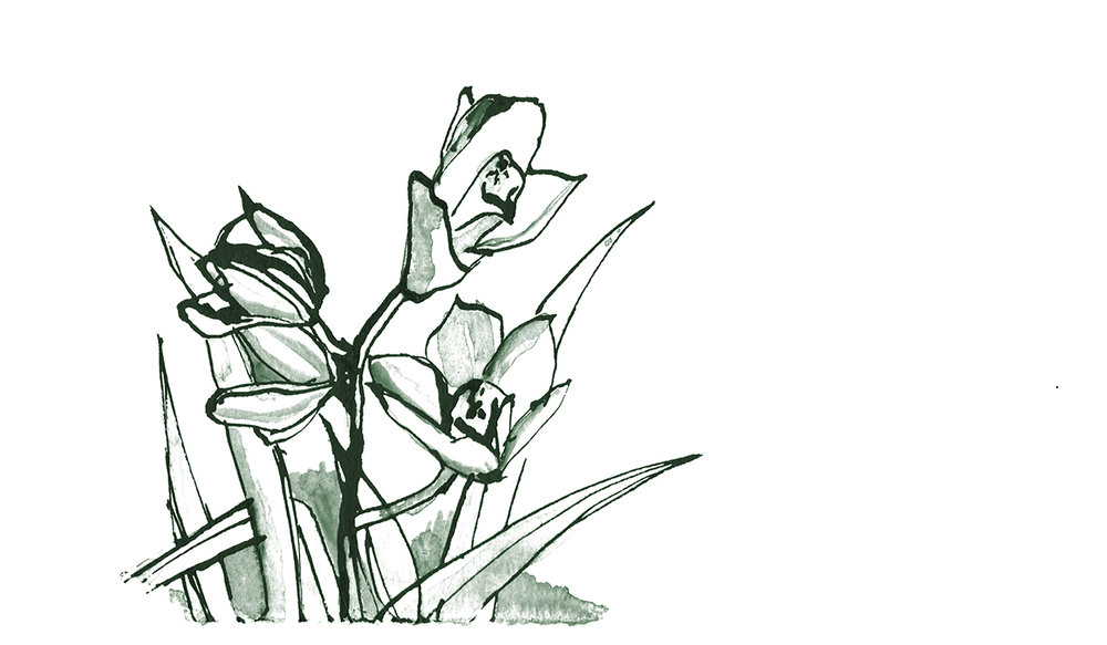 salbinda-ink_0006_orchids.jpg