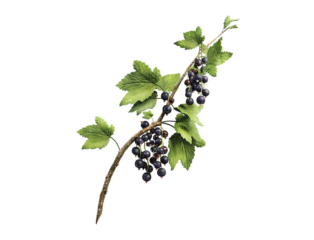 Kaskein_Blackcurrant.jpg