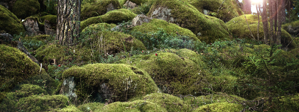 Kaskein_moss_and_sunlight_72dpi.jpg