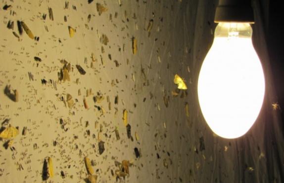 kukainu-lampa574.jpg