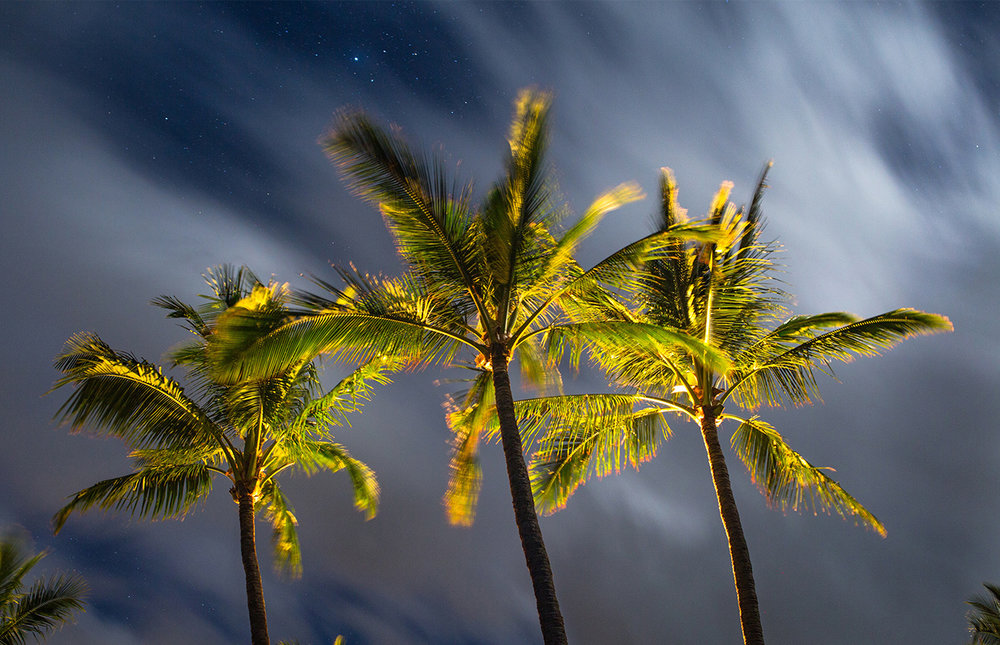 paradise tropical.jpg