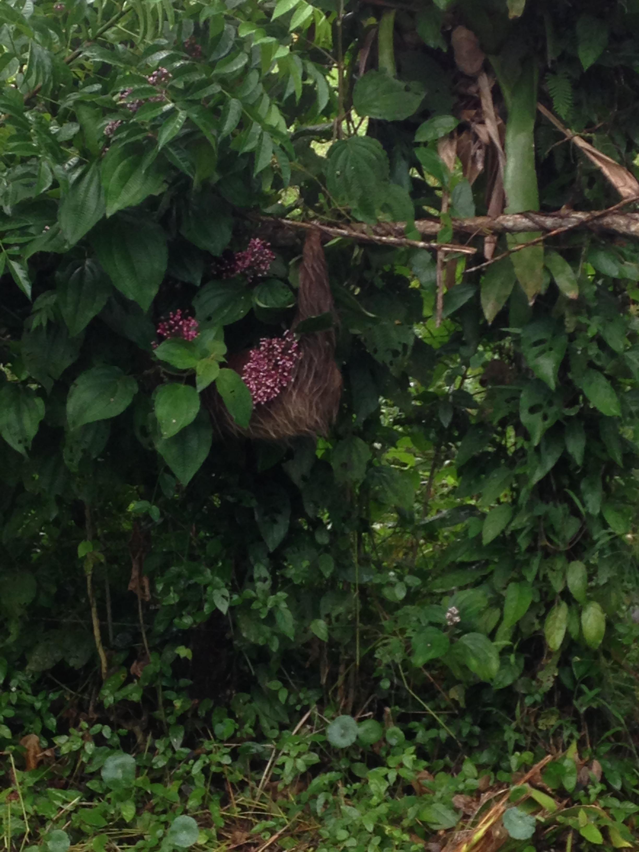 Sloth again
