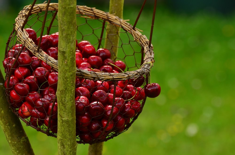 cherries-1503974_1920.jpg