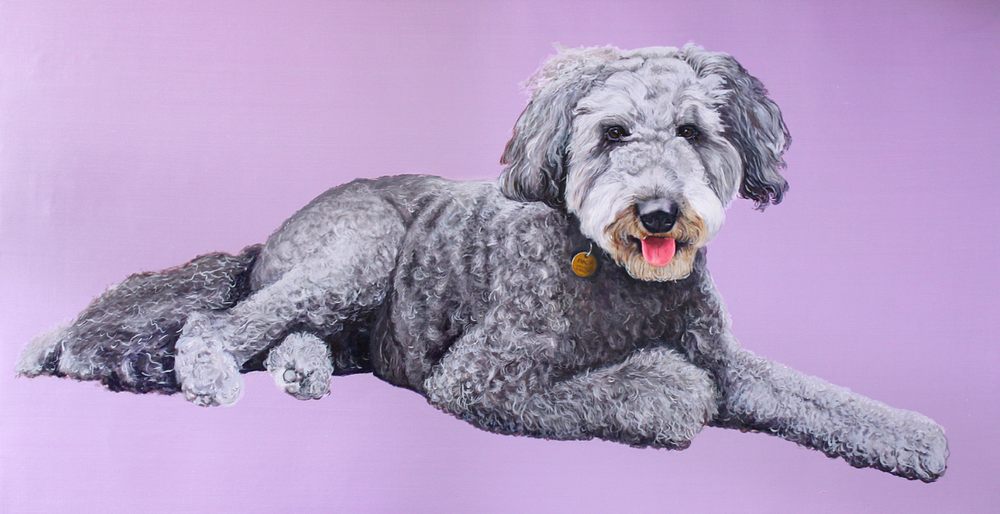 Macy Gray the Labradoodle