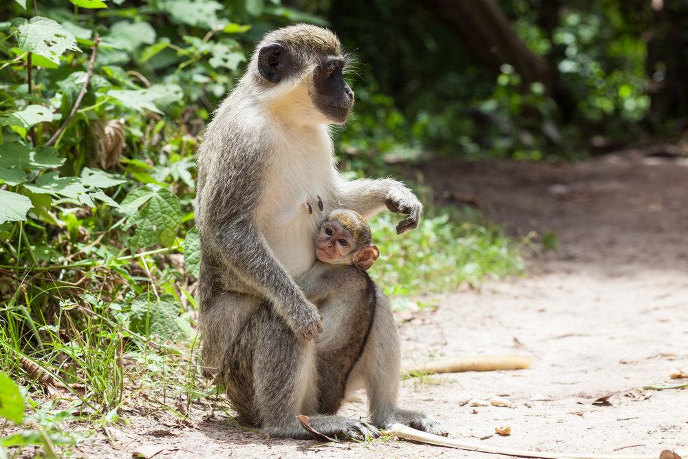 Monkey_Forest_13.jpg