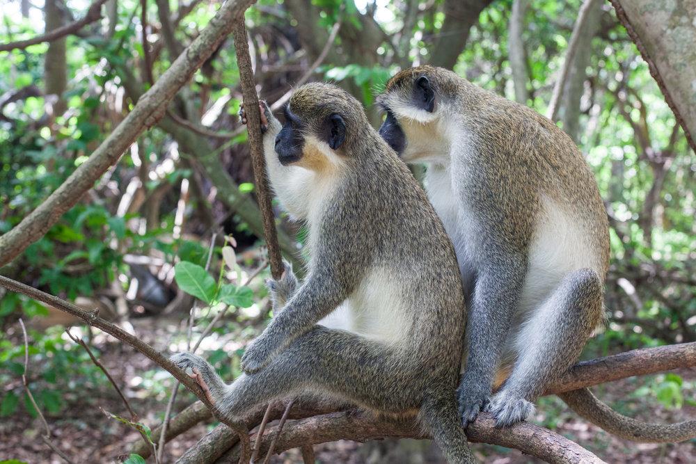 Monkey_Forest_45.jpg