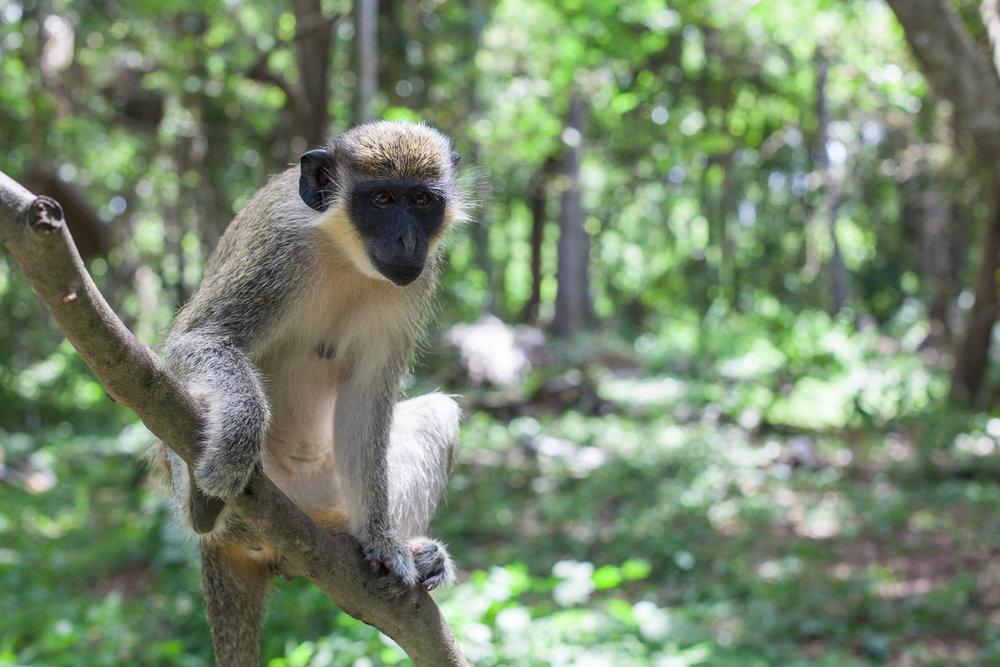 Monkey_Forest_67.jpg