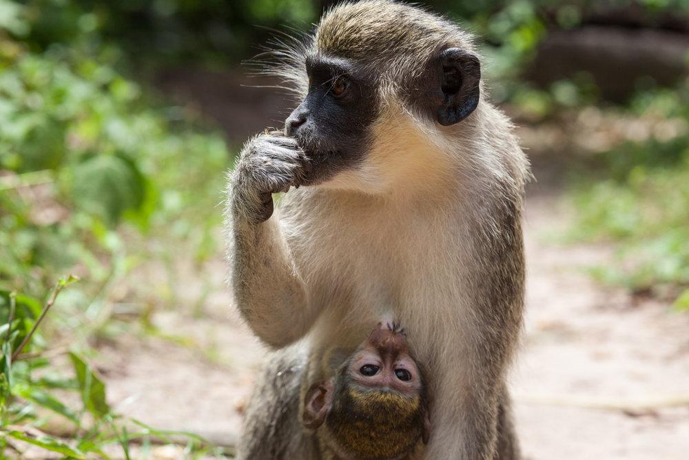 Monkey_Forest_17.jpg