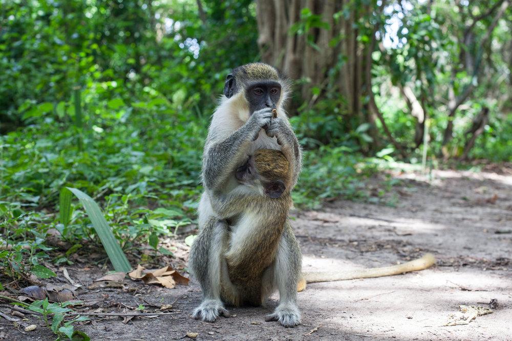 Monkey_Forest_69.jpg