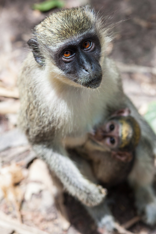 Monkey_Forest_07.jpg