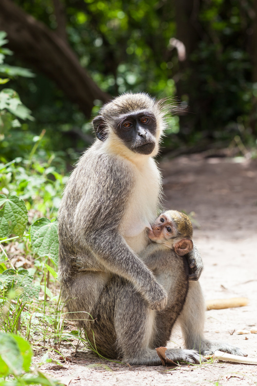 Monkey_Forest_14.jpg
