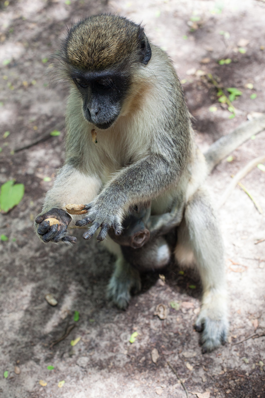 Monkey_Forest_56.jpg