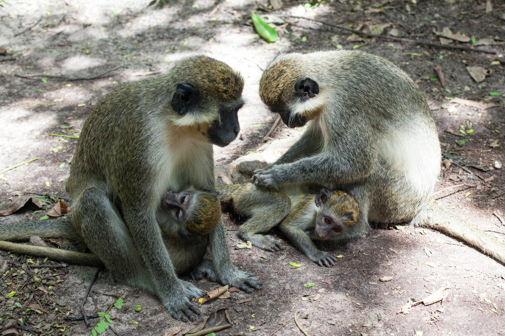 Monkey_Forest_49.jpg