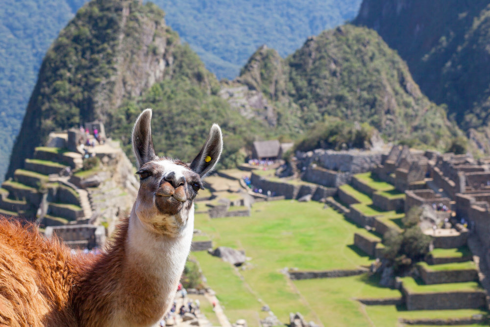 The iconic photograph of a Llama in front of Machu Picchu by Geraint Rowland.