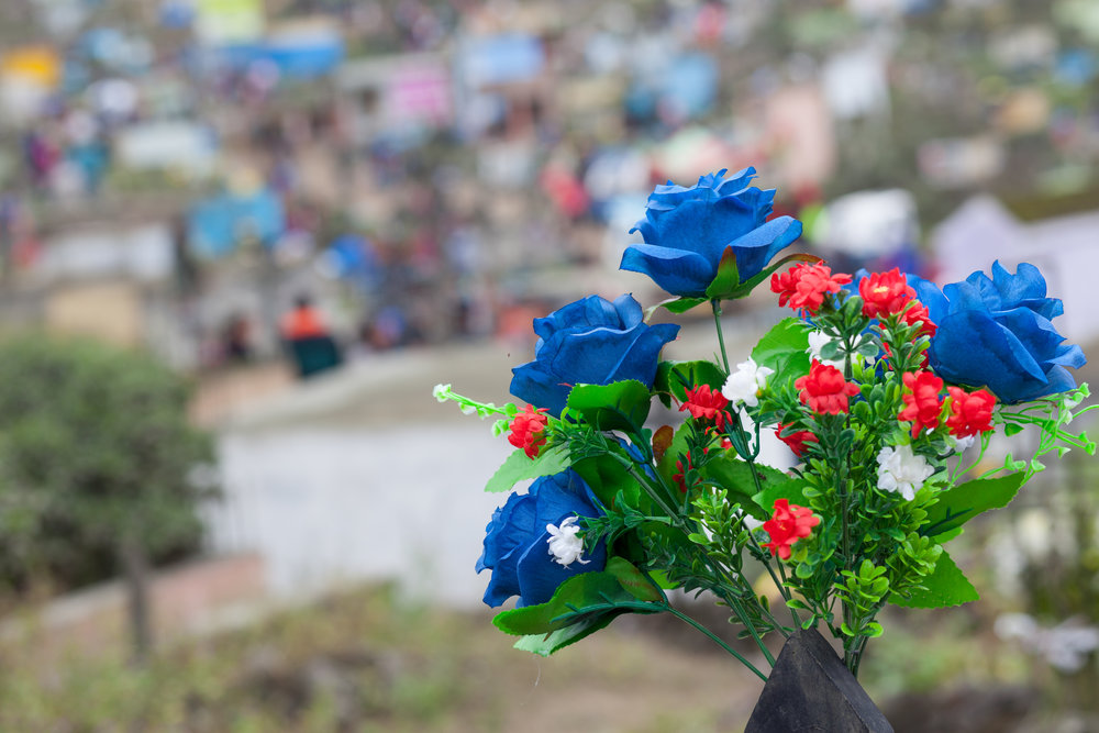 Blue flowers at a large graveyard in South America.