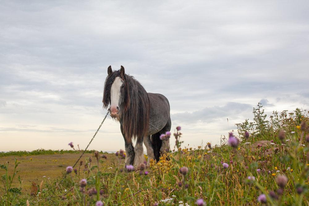 HORSE_EDIT.jpg