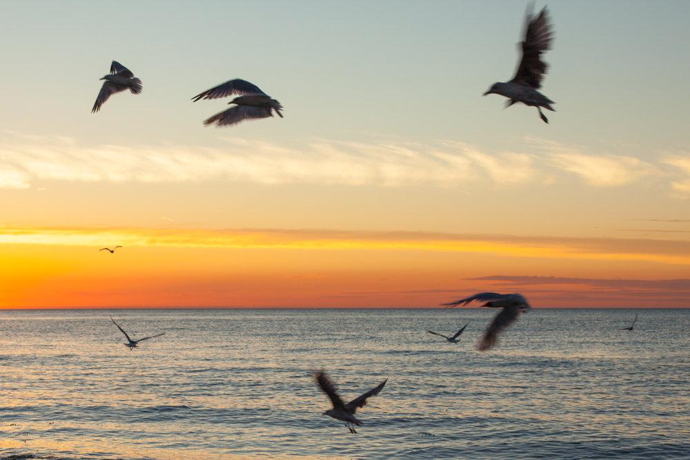 birds_seaside.jpg