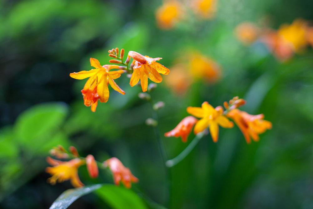 Wild flowers.