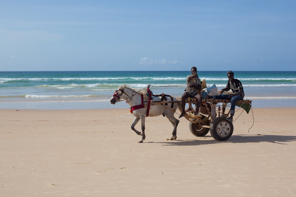Horse and Carts are used in Senegal to transport people and produce up and down the hard packed sand beach of Yoff.
