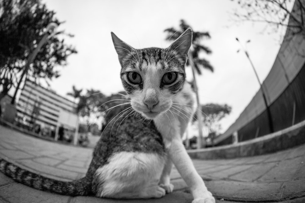 Visit Miraflores, cat photography by Geraint Rowland.