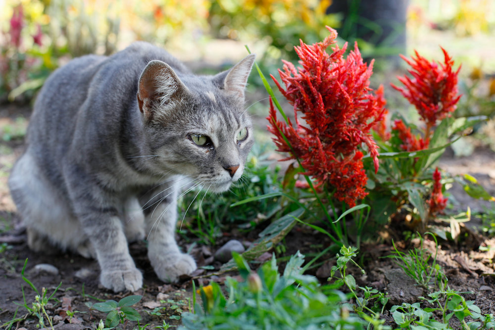 Cats and Flowers in Miraflores.