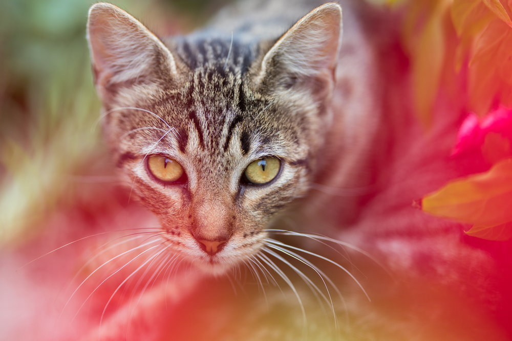 Cat_PQ_05.jpg