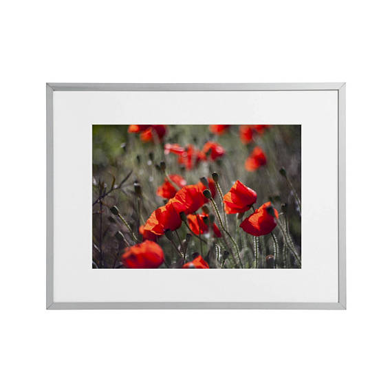 Nature art prints by Geraint Rowland.