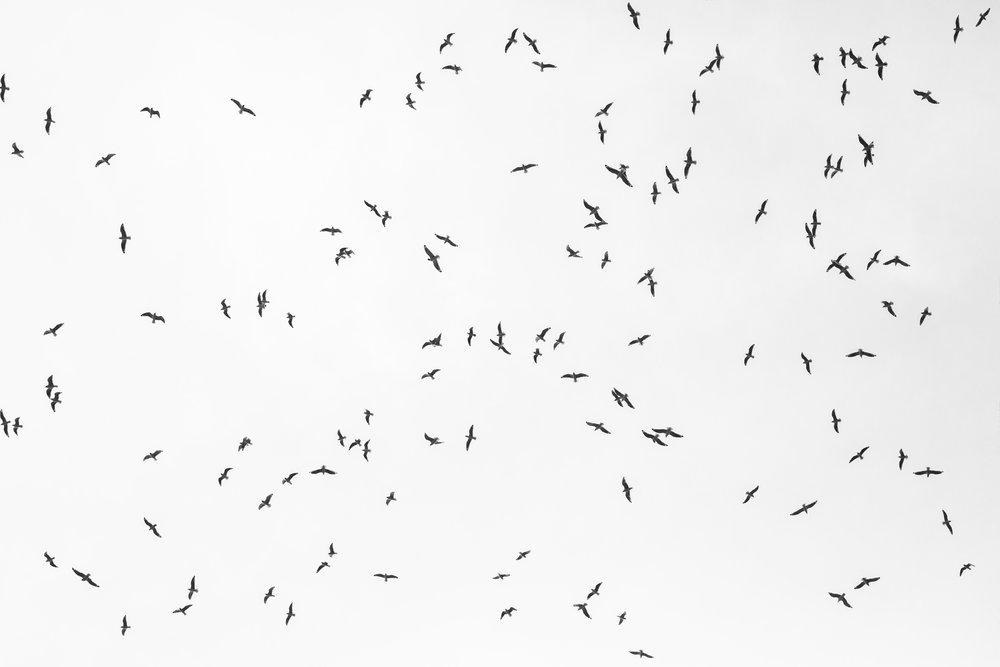 Birds_BW_Main.jpg