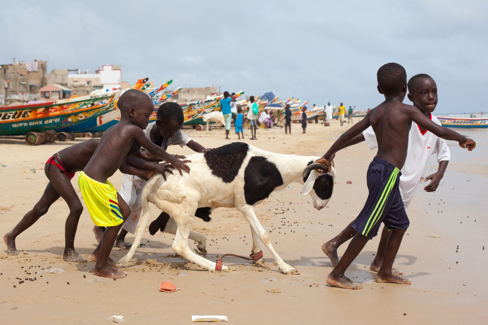 Children lead a sheep to the ocean for a wash in preparation of the Tabaski festival.