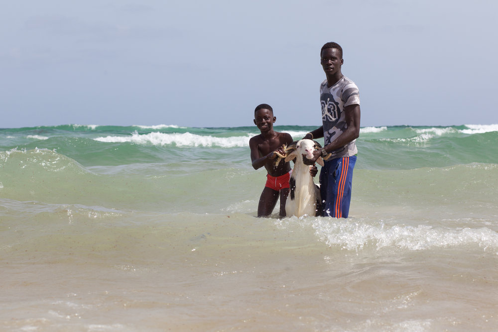 Washing a sheep in the ocean in Senegal before selling it for the Tabaski.