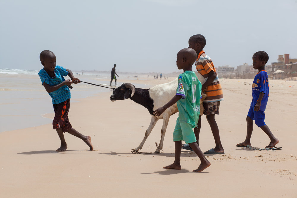 Children lead a sheep into the ocean for a clean prior to the Tabaski Festival in Senegal.