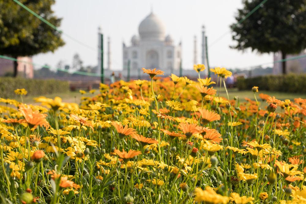 Agra_23.jpg