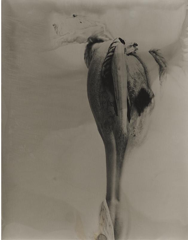 joyceseymore-solarized_botanicals-Iris_6.jpg