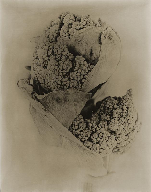 joyceseymore-solarized_botanicals-Rhubarb_1.jpg