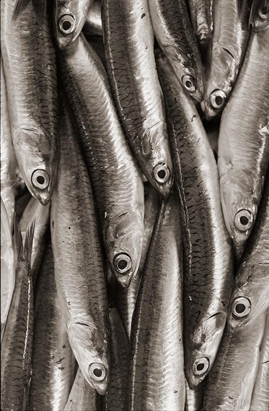 Fish: Venice