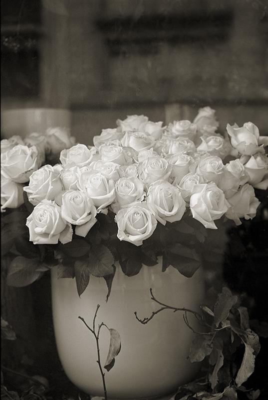 Roses: Paris