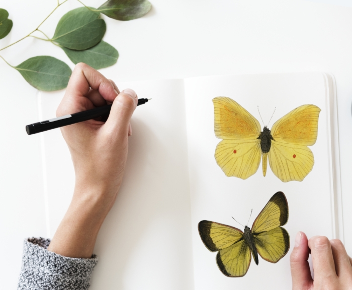 hobby butterfly painting.jpg