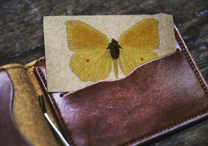 butterfly in wallet.jpg