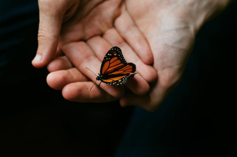 butterfly in hand.jpg