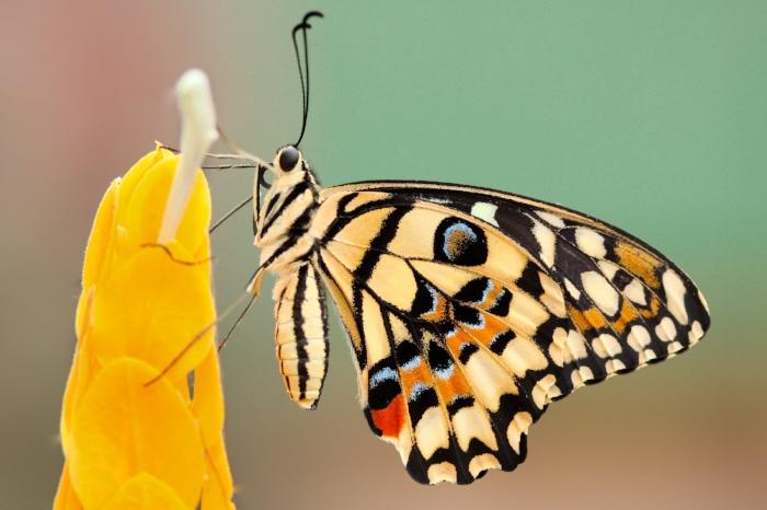 butterfly f.jpg