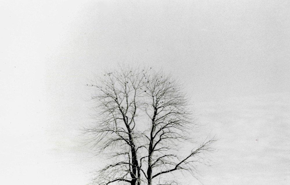 Tree Lungs.jpg
