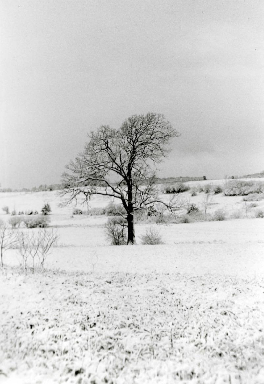 Winter Solitude.jpg