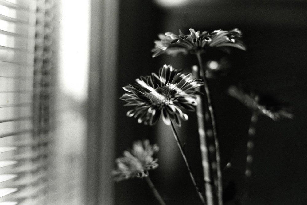 Past Light.jpg